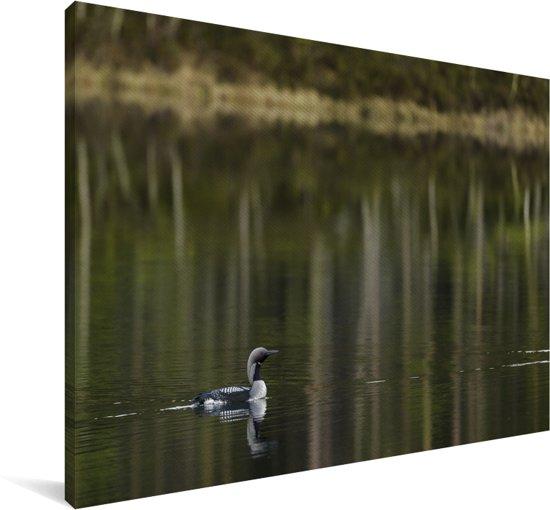 Parelduiker zwemt door het water Canvas 140x90 cm - Foto print op Canvas schilderij (Wanddecoratie woonkamer / slaapkamer)
