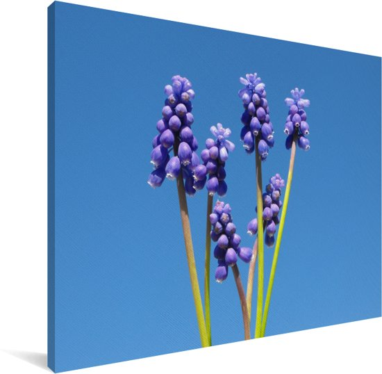Druivenhyacinten en een heldere blauwe hemelachtergrond Canvas 160x120 cm - Foto print op Canvas schilderij (Wanddecoratie woonkamer / slaapkamer) XXL / Groot formaat!