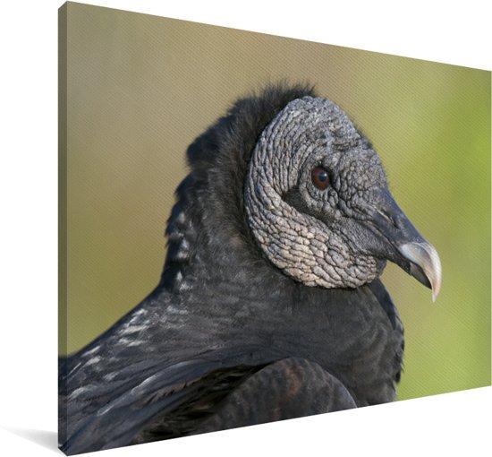 Een portret van een zwarte gier Canvas 90x60 cm - Foto print op Canvas schilderij (Wanddecoratie woonkamer / slaapkamer)
