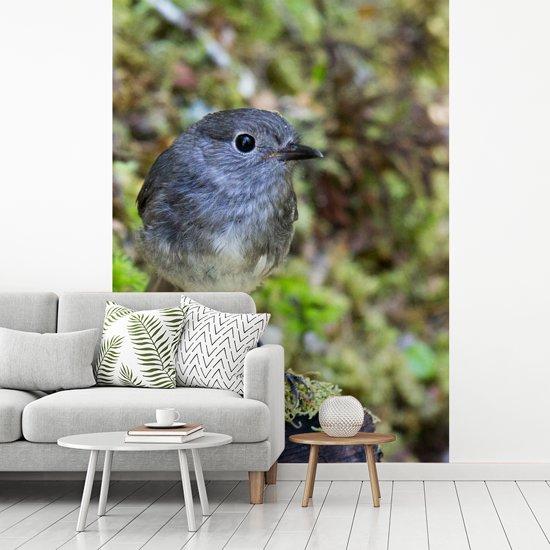 Fotobehang vinyl - Close-up van een Nieuw-Zeelandse vliegenvanger breedte 190 cm x hoogte 260 cm - Foto print op behang (in 7 formaten beschikbaar)
