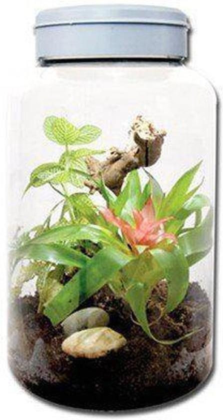 Lucky Reptile InsectTarrium - 5L