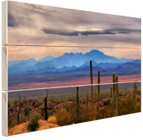 Sonoran woestijn Mexico Hout 80x60 cm - Foto print op Hout (Wanddecoratie)
