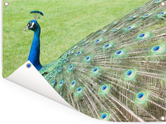 Verenvacht van groene pauw goed in beeld Tuinposter 160x120 cm - Tuindoek / Buitencanvas / Schilderijen voor buiten (tuin decoratie) XXL / Groot formaat!