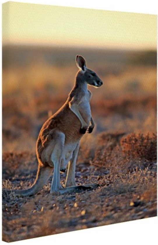 Staande rode kangoeroe Canvas 80x120 cm - Foto print op Canvas schilderij (Wanddecoratie)