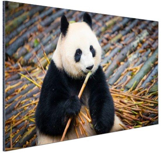 Reuzepanda die bamboe eet Aluminium 120x80 cm - Foto print op Aluminium (metaal wanddecoratie)