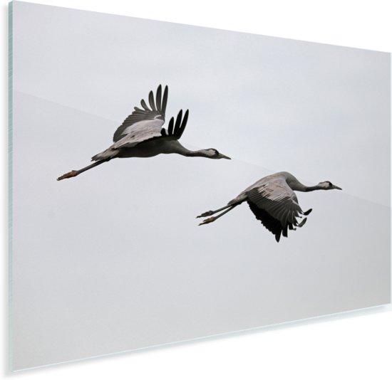 Europese kraanvogels vliegen samen door de lucht Plexiglas 180x120 cm - Foto print op Glas (Plexiglas wanddecoratie) XXL / Groot formaat!