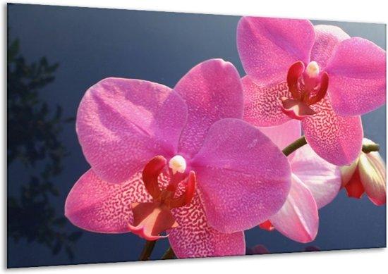 Canvas schilderij Orchidee   Paars, Wit, Rood   120x70cm 1Luik