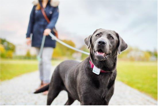 GPS tracker systeem voor hond & kat
