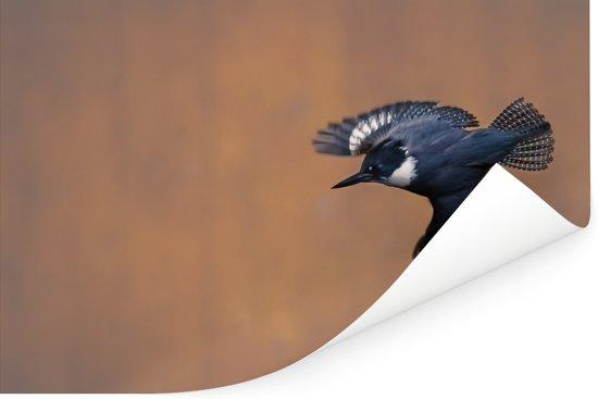 Een Bandijsvogel met zijn vleugels gespreid Poster 120x80 cm - Foto print op Poster (wanddecoratie woonkamer / slaapkamer)