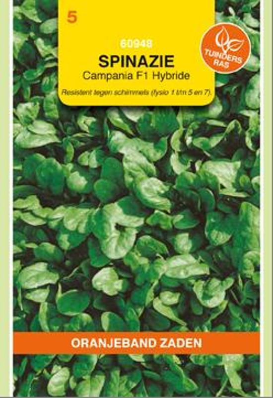 Oranjeband - Spinazie Campania F1
