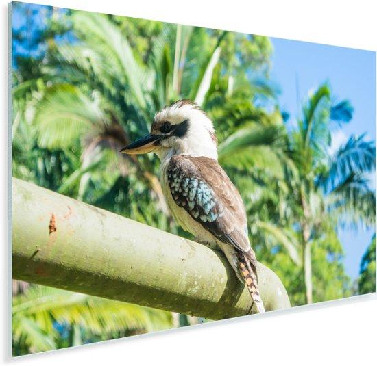 Een kookaburra zittend in de tropische omgeving met palmbomen Plexiglas 180x120 cm - Foto print op Glas (Plexiglas wanddecoratie) XXL / Groot formaat!