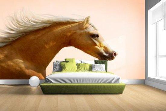 Welsh pony foto afdruk Fotobehang 380x265 (Airtex, Naadloos)