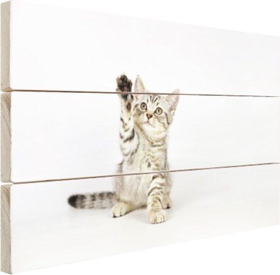 Kitten steekt pootje in de lucht Hout 120x80 cm - Foto print op Hout (Wanddecoratie)