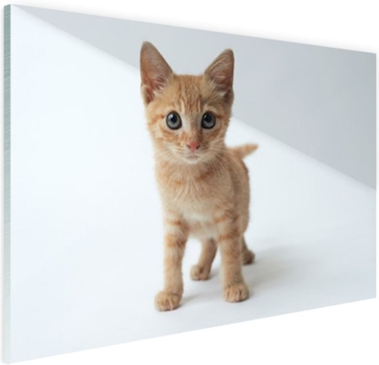 Klein rood katje Glas 60x40 cm - Foto print op Glas (Plexiglas wanddecoratie)