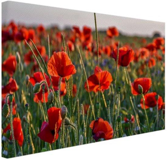 Klaprozen in het veld Canvas 60x40 cm - Foto print op Canvas schilderij (Wanddecoratie woonkamer / slaapkamer) / Bloemen Canvas Schilderijen