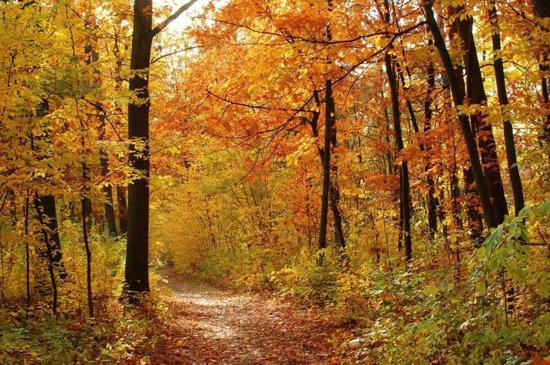 Fotobehang - Bos in herfst - 418x260 cm. Vliesbehang 150 grams A ...