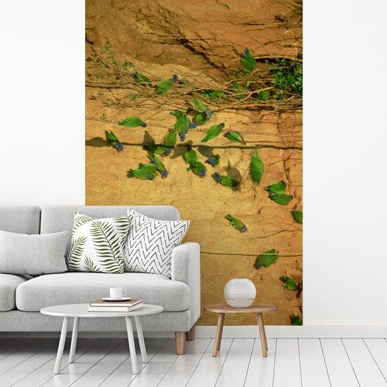 Fotobehang vinyl - Sialia op de kleirotsen in het Manu National Park breedte 190 cm x hoogte 280 cm - Foto print op behang (in 7 formaten beschikbaar)
