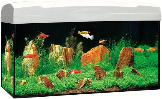 Bolcom Marina Kit Aquarium Wit 54l 60 X 30 X 30 Cm