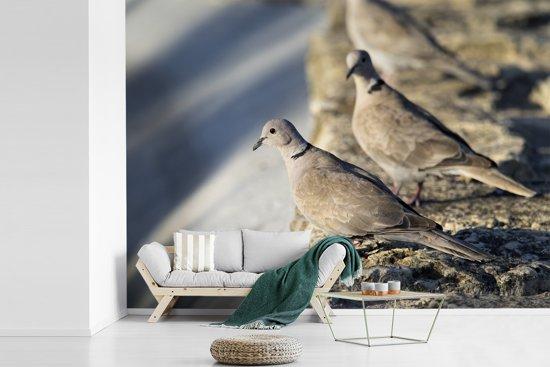 Fotobehang vinyl - Twee Turkse tortels in de zon breedte 305 cm x hoogte 220 cm - Foto print op behang (in 7 formaten beschikbaar)