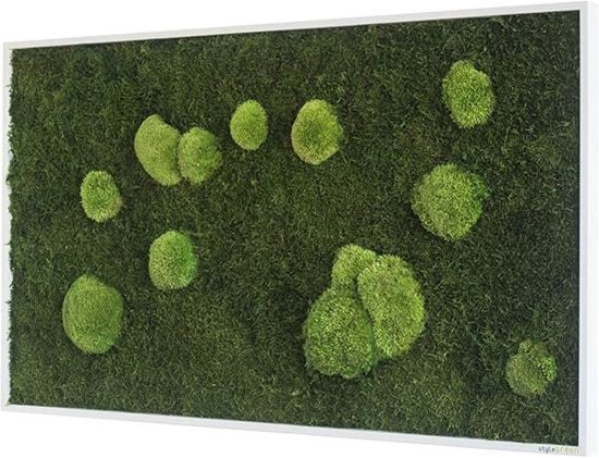 Verticale tuin - Flat & Pole moss - 100 x 60cm