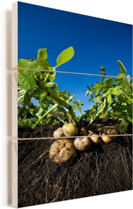 De wortels en stengelknollen van aardappelen onder een blauwe lucht Vurenhout met planken 60x90 cm - Foto print op Hout (Wanddecoratie)