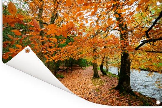 De herfstbossen in het Nationaal park Dartmoor in Engeland Tuinposter 90x60 cm - Tuindoek / Buitencanvas / Schilderijen voor buiten (tuin decoratie)