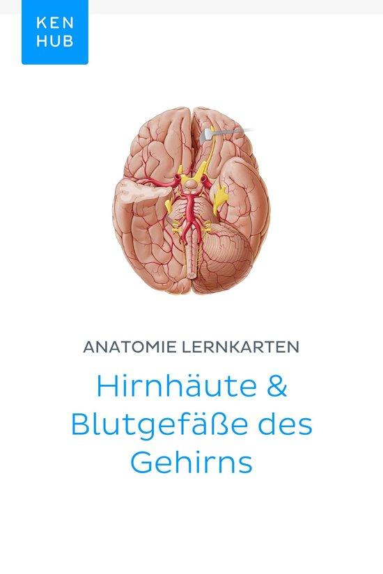 bol.com | Anatomie Lernkarten: Hirnhäute & Blutgefäße des Gehirns ...
