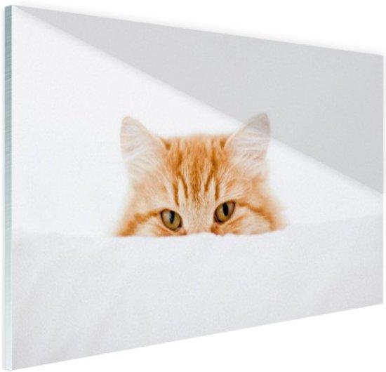 Portret van rode kat Glas 90x60 cm - Foto print op Glas (Plexiglas wanddecoratie)