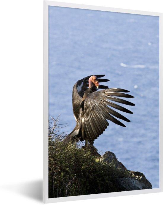 Foto in lijst - Een Californische condor bij de Stille Oceaan fotolijst wit 40x60 cm - Poster in lijst (Wanddecoratie woonkamer / slaapkamer)