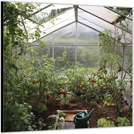 Dibond –Greenhouse– 50x50cm Foto op Dibond;Aluminium (Wanddecoratie van metaal)
