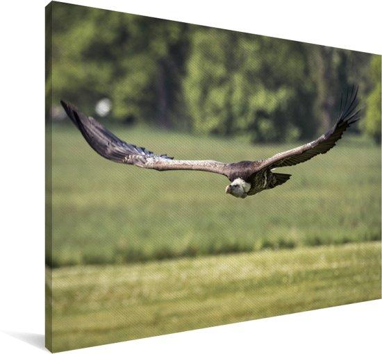 Vale gier vliegt laag over de grond Canvas 60x40 cm - Foto print op Canvas schilderij (Wanddecoratie woonkamer / slaapkamer)