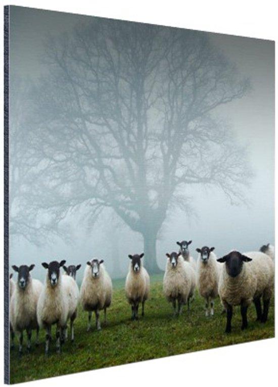 FotoCadeau.nl - Kudde in de mist Aluminium 50x50 cm - Foto print op Aluminium (metaal wanddecoratie)