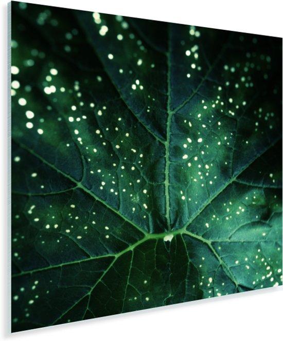 Bladdetail van courgetteplanten Plexiglas 20x20 cm - klein - Foto print op Glas (Plexiglas wanddecoratie)