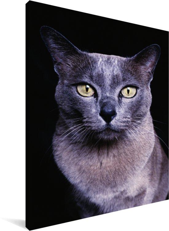 Grijs-blauwe Burmees kat op een zwarte achtergrond Canvas 120x160 cm - Foto print op Canvas schilderij (Wanddecoratie woonkamer / slaapkamer) / Huisdieren Canvas Schilderijen XXL / Groot formaat!