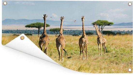Giraffen in Masai Mara National Park in Kenia Tuinposter 60x40 cm - klein - Tuindoek / Buitencanvas / Schilderijen voor buiten (tuin decoratie)