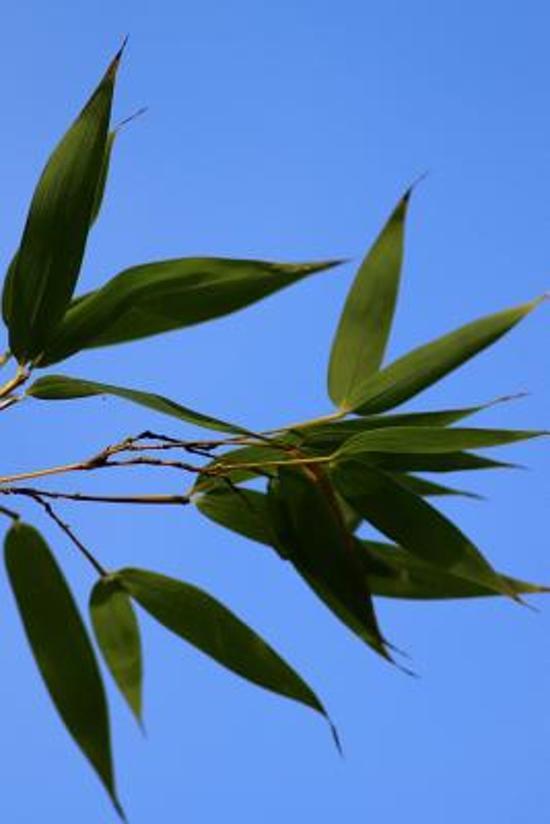 Bamboo Leaves Journal