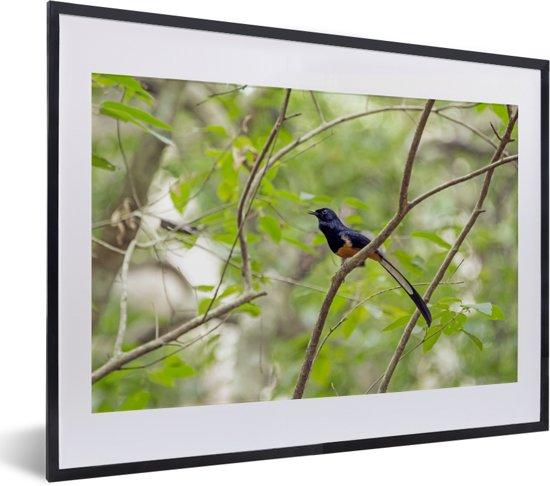 Foto in lijst - Shamalijster in het struikgewas fotolijst zwart met witte passe-partout klein 40x30 cm - Poster in lijst (Wanddecoratie woonkamer / slaapkamer)