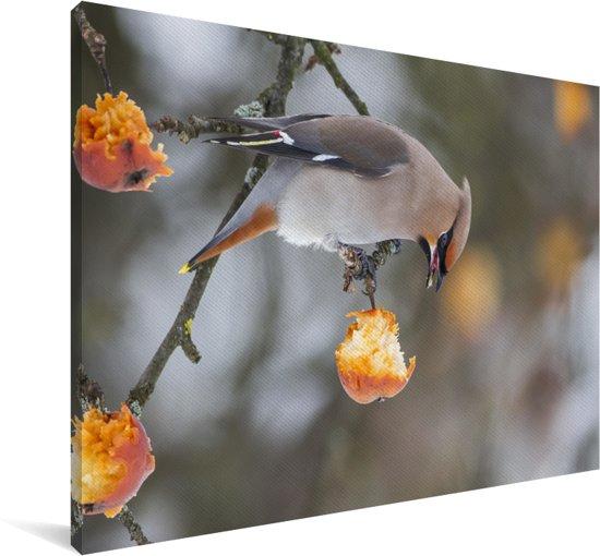 Pestvogel eet van een appeltje Canvas 30x20 cm - klein - Foto print op Canvas schilderij (Wanddecoratie woonkamer / slaapkamer)