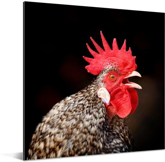 Close up van een rode haan Aluminium 50x50 cm - Foto print op Aluminium (metaal wanddecoratie)