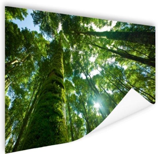 Tropische jungle in Azie Poster 180x120 cm - Foto print op Poster (wanddecoratie woonkamer / slaapkamer) XXL / Groot formaat!