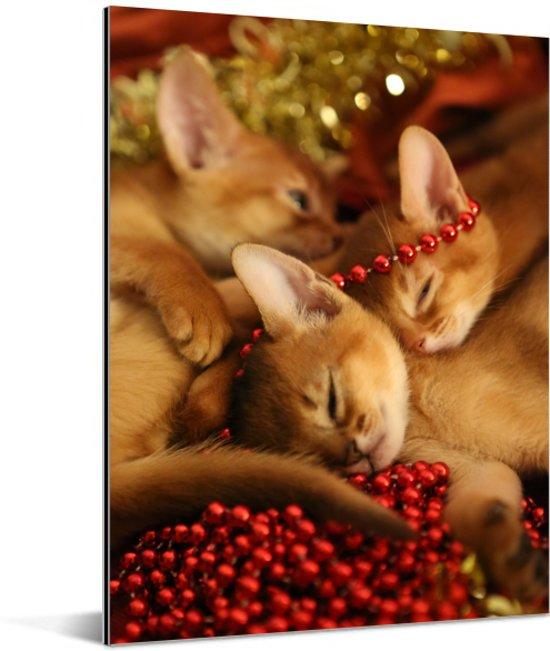 Schattige Abessijn kittens knuffelen Aluminium 60x80 cm - Foto print op Aluminium (metaal wanddecoratie)