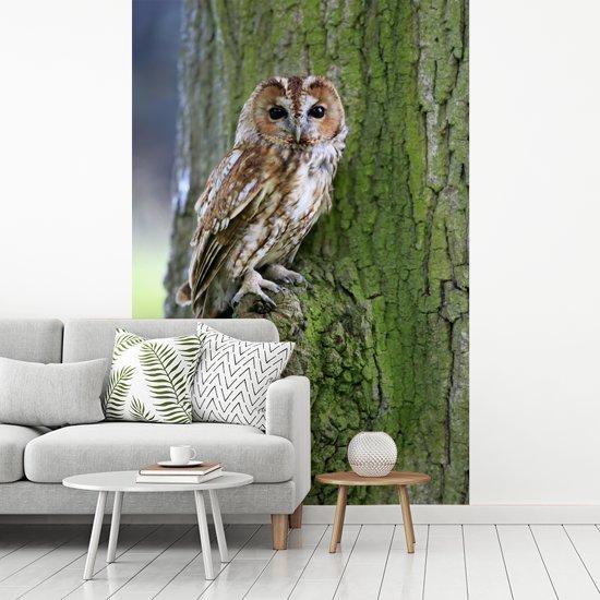 Fotobehang vinyl - Een bosuil op een boom met mos breedte 235 cm x hoogte 350 cm - Foto print op behang (in 7 formaten beschikbaar)