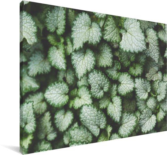 Verschillende bladeren van een brandnetel die zijn bevroren Canvas 30x20 cm - klein - Foto print op Canvas schilderij (Wanddecoratie woonkamer / slaapkamer)