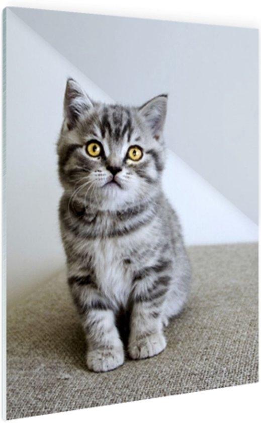 FotoCadeau.nl - Grijze kitten met gele ogen Glas 60x90 cm - Foto print op Glas (Plexiglas wanddecoratie)