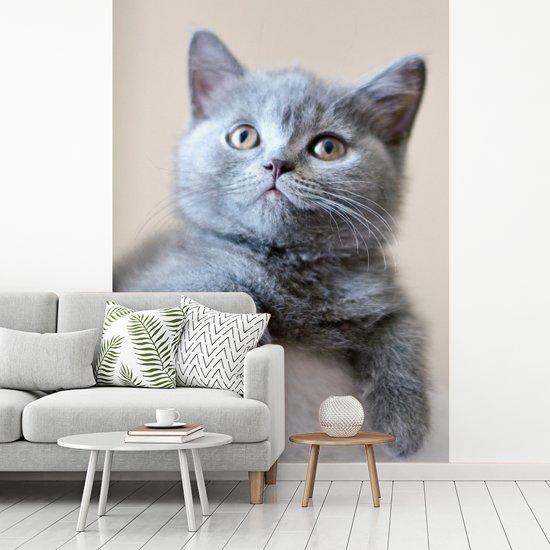 Fotobehang vinyl - Portret van een korthaar breedte 190 cm x hoogte 260 cm - Foto print op behang (in 7 formaten beschikbaar)
