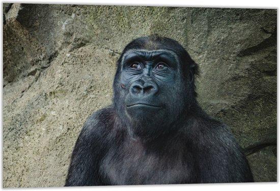 Dibond –Gorilla Aap– 60x40 Foto op Dibond;Aluminium (Wanddecoratie van metaal)