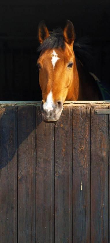 Fotobehang Paard staldeur - Deurposter - 210 x 95 cm - Multi