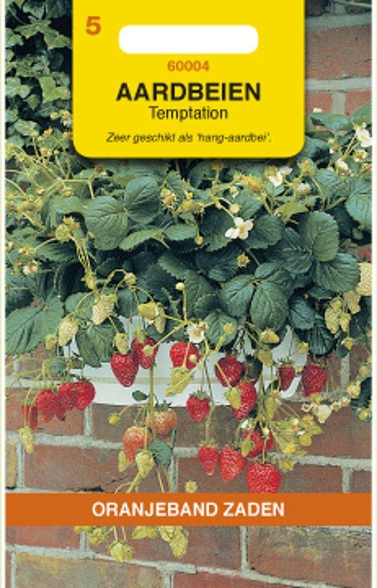 Oranjeband - Aardbei Temptation