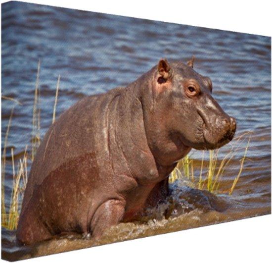 Baby nijlpaard Canvas 80x60 cm - Foto print op Canvas schilderij (Wanddecoratie)