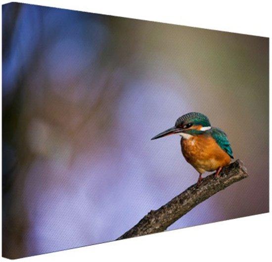 Wanddecoratie Met Fotos.Bol Com Ijsvogel Canvas 80x60 Cm Foto Print Op Canvas Schilderij